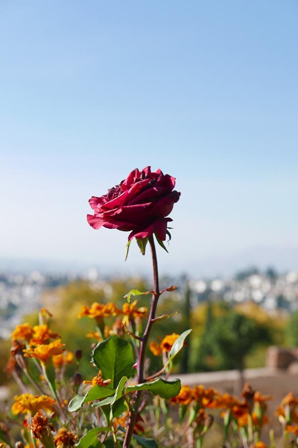 Alhambra_242.jpg