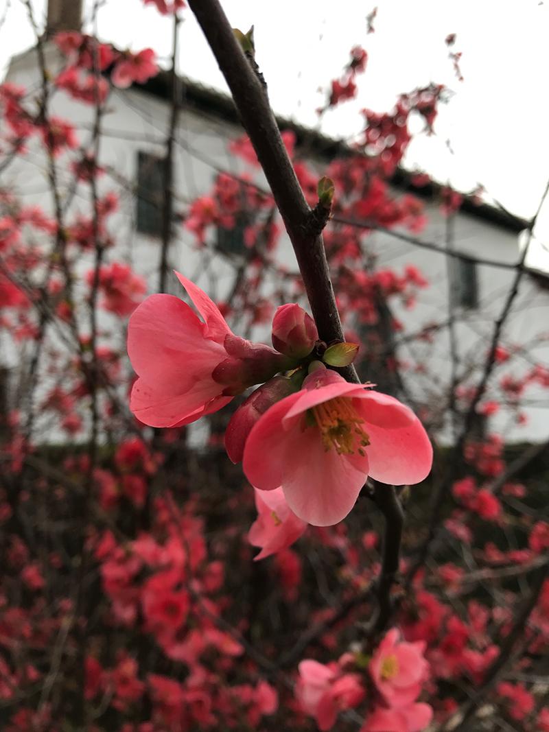 GFL floral.jpg