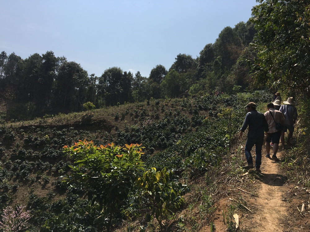 Kevin Bohlin and Kate Black from St. Clare exploring coffee farms in the Maejantai Village of Chiang Rai in Thailand