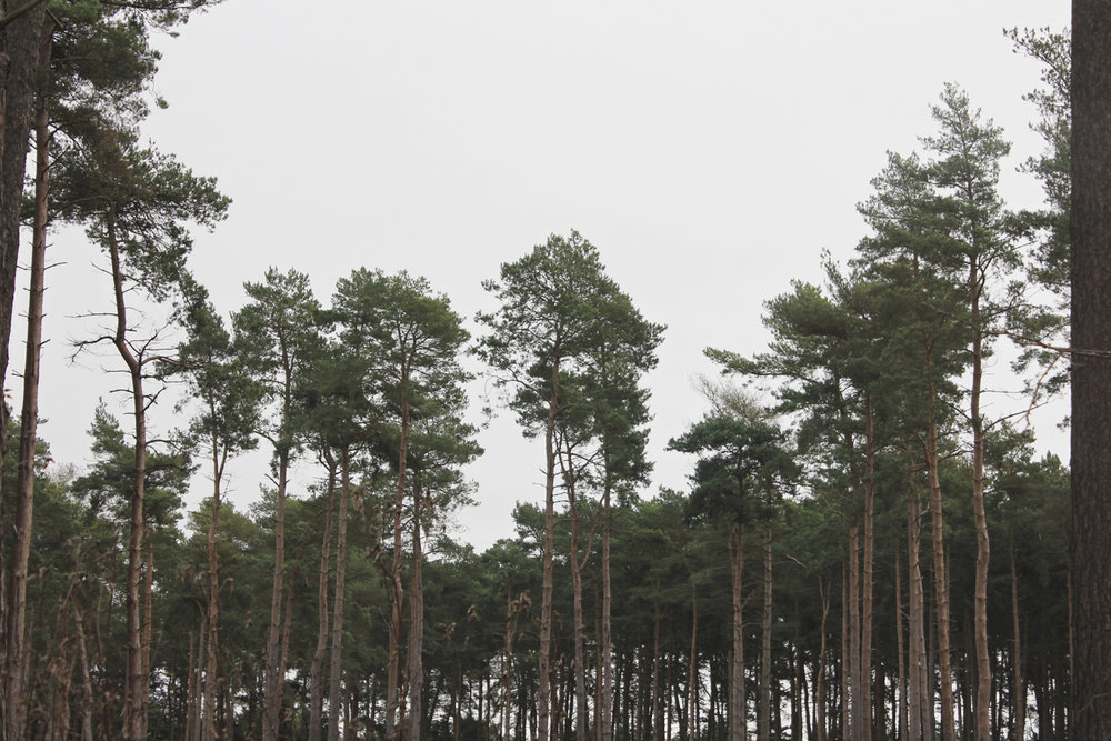 center-parcs-forest-view.jpg