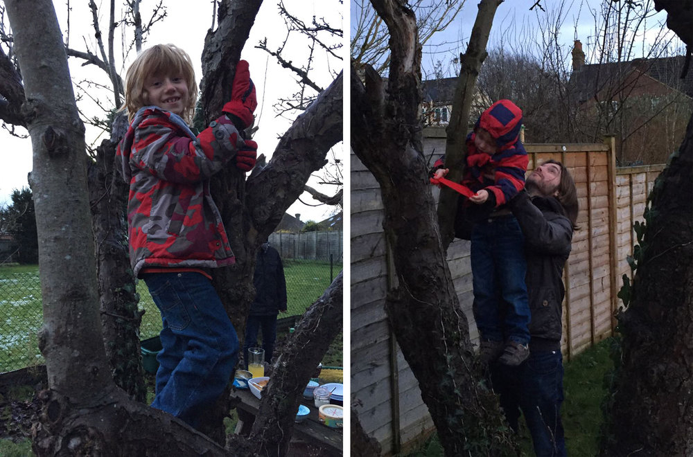 wassail-apple-tree-climbing.jpg