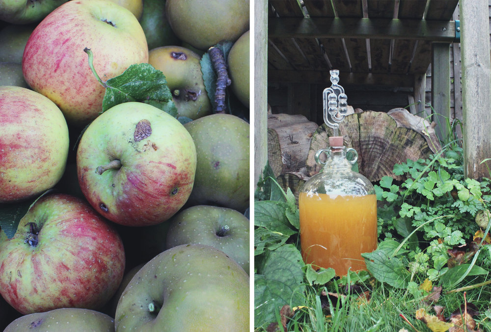 apples-homebrew-cider.jpg