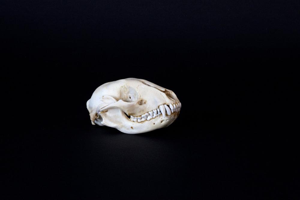 PurchaseSkullBlack2017.jpg