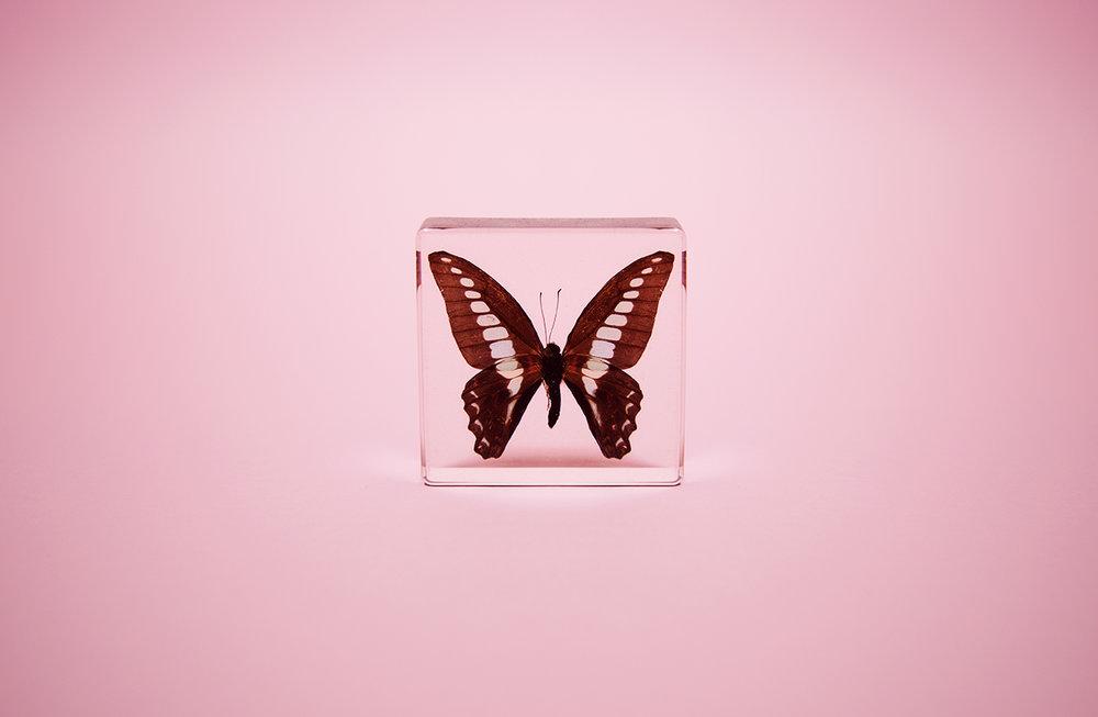 MothLR.jpg