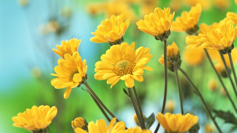 beautiful-yellow-flowers.jpeg