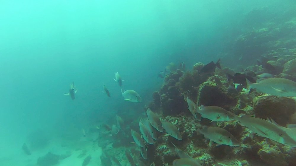 Fish21-min.jpg