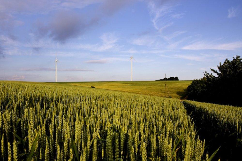Corn_field-1100x730.jpg