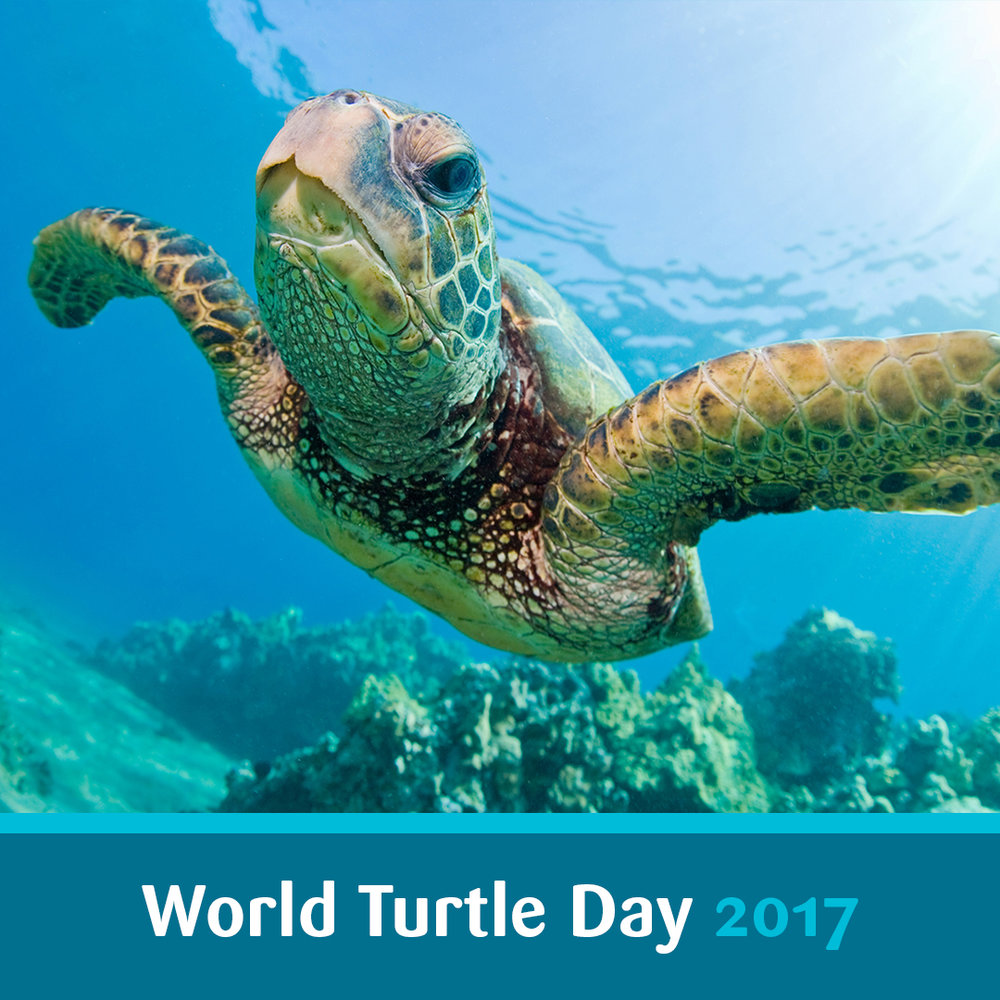 World Turtle Day.jpg