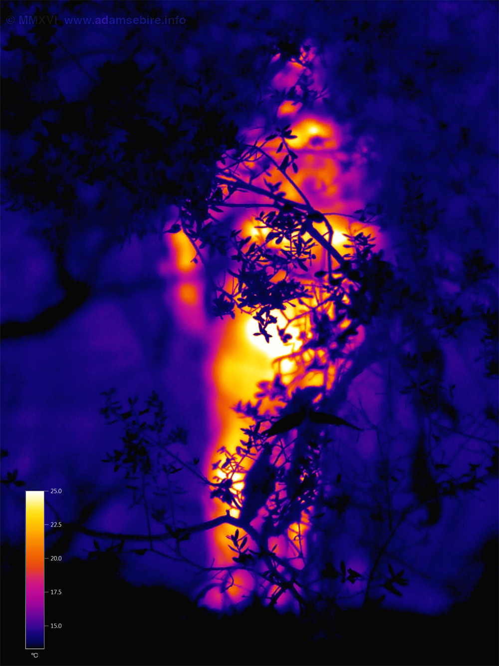 In the Heat of the Moment (Thermal Image 00349)(2015)