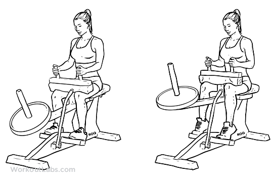 Seated Calf Machine 2 warm up sets 4 sets of 12 increasing weight 3 sets of 12 decreasing weight