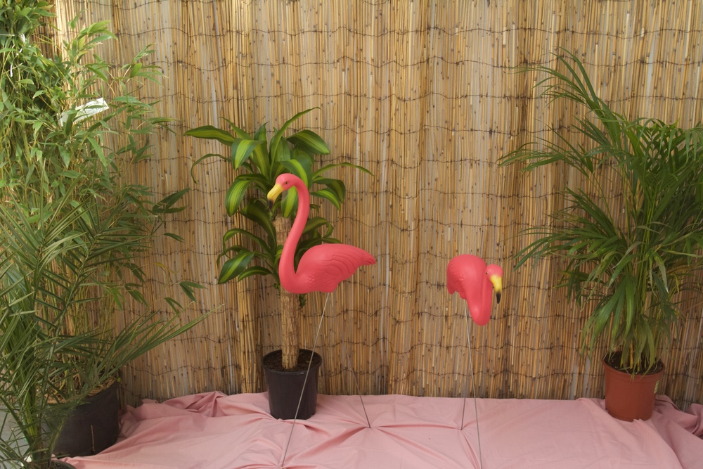 flamingozoo_01.jpg
