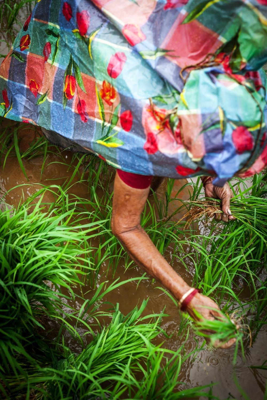 woman plant.jpg