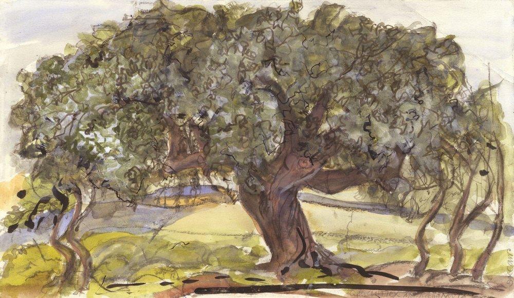 Quercus Ilex, We Are All Nature Markadia