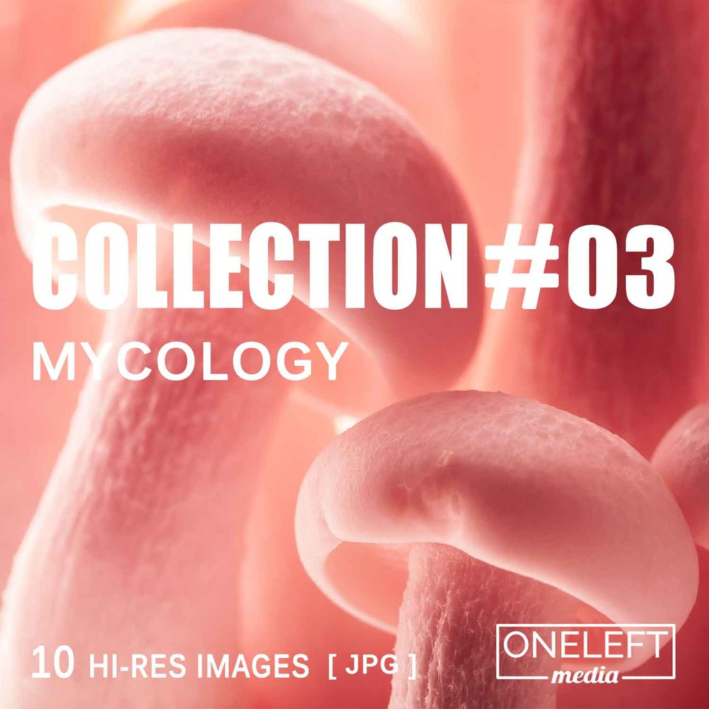 collection-03.jpg