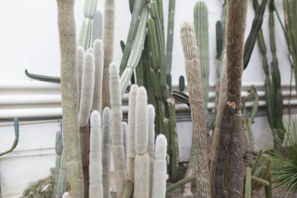 gromagasinet oslo botaniske kaktus