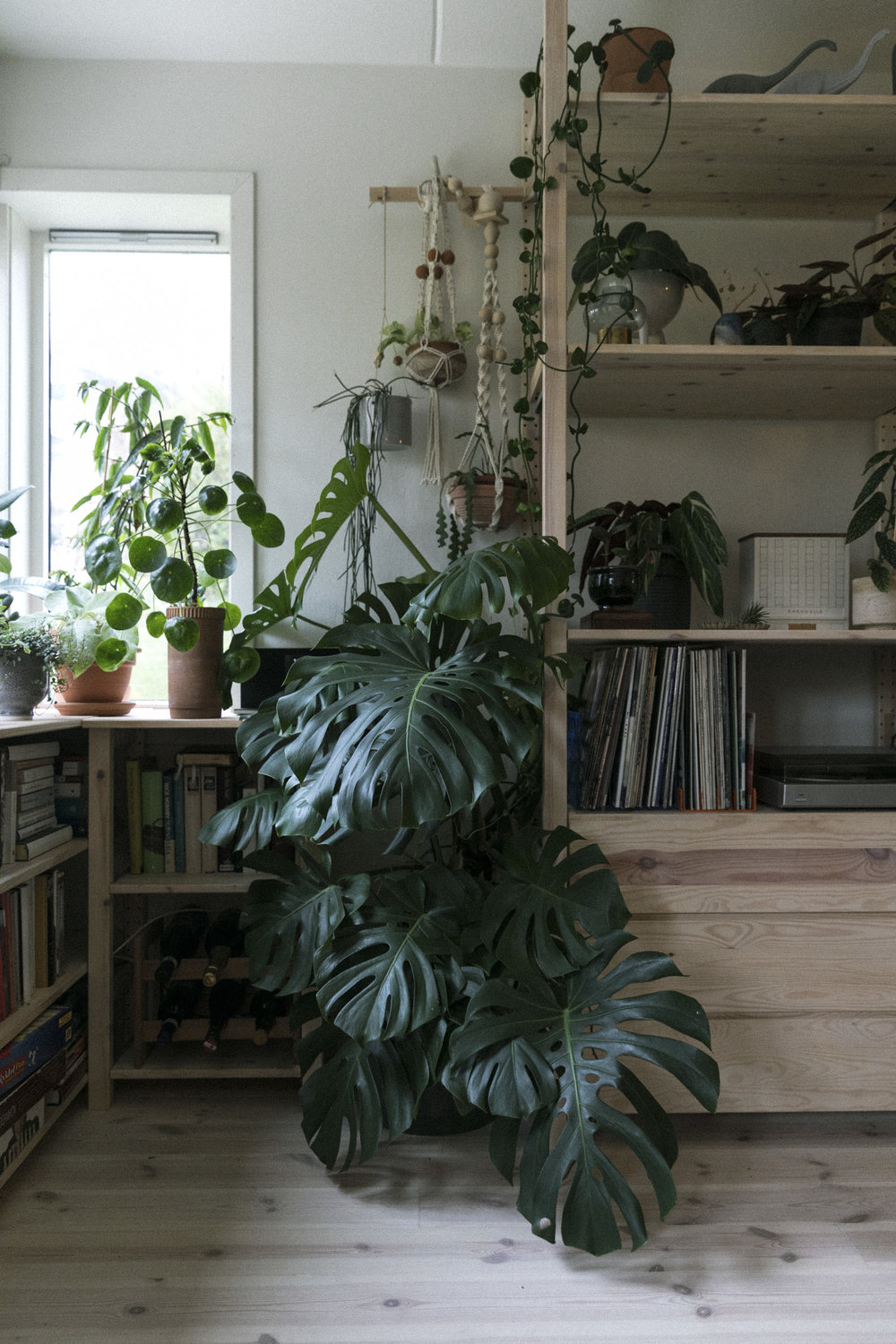 Plantemagasinet GRO Jenny Leite-Vikra Monstera