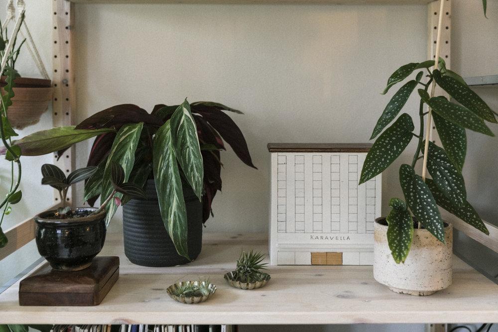 Plantemagasinet GRO Jenny Leite-Vikra Begonia