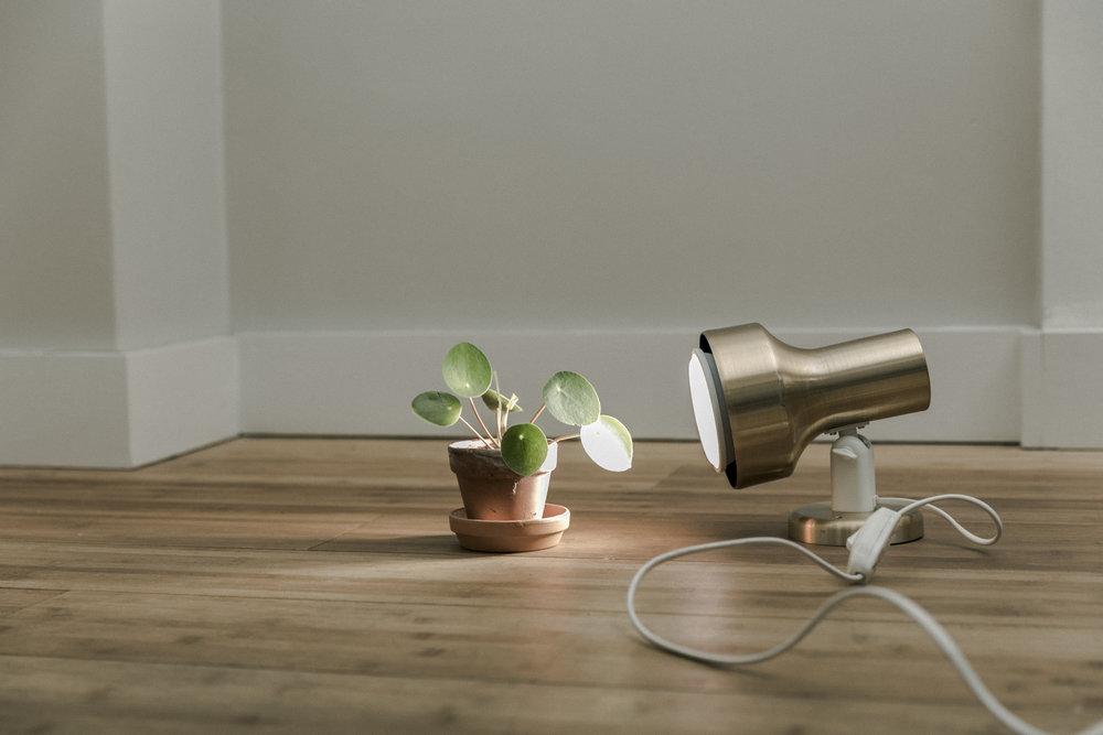 LED fra IKEA sammen med pilea.