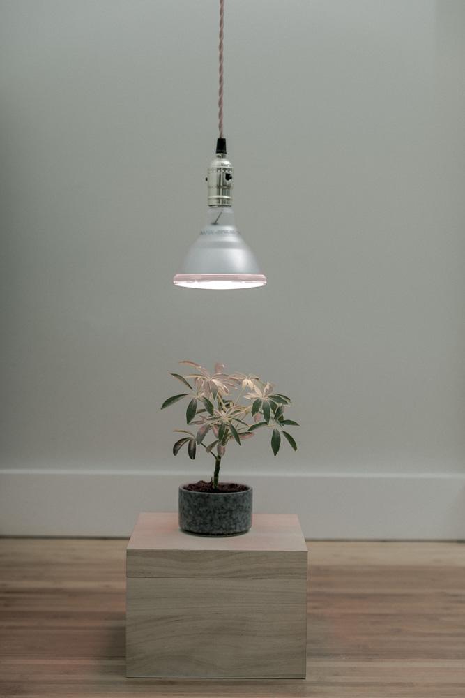 LED fra Clas Ohlson hengende over en liten schefflera.