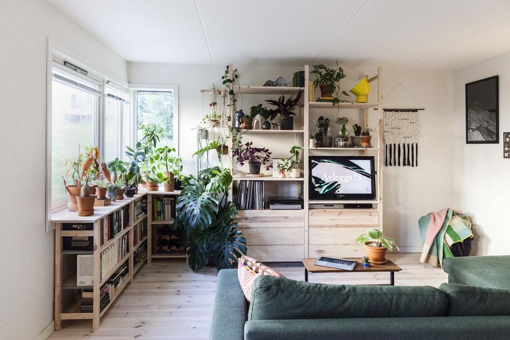 IMG_2265_GRO_IKEA_29_08.JPG