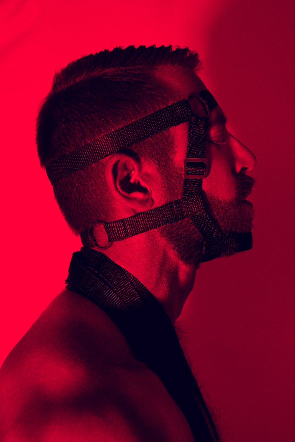 Face Harness - the WEBBING EDITION