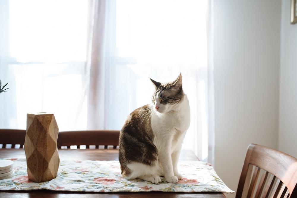 cat-on-table-in-sun-©-Elisabeth-Waller-47.jpg