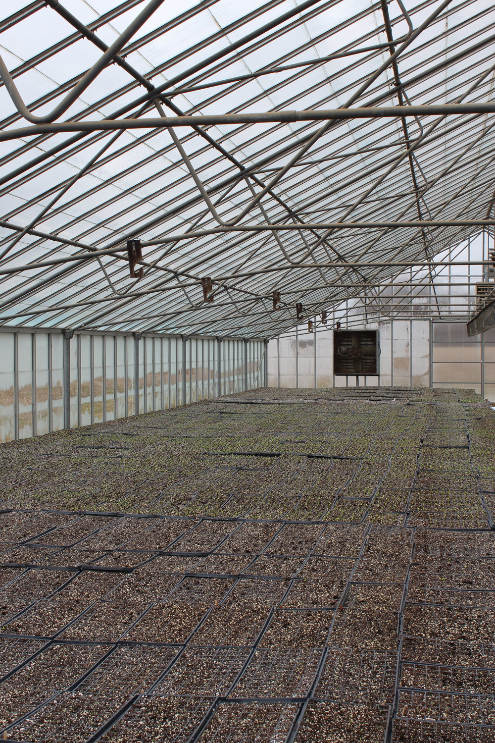Whole Greenhouse View.JPG