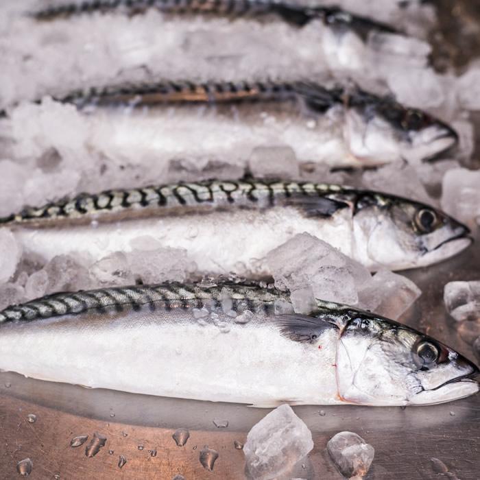 WholesaleFish_4.jpg