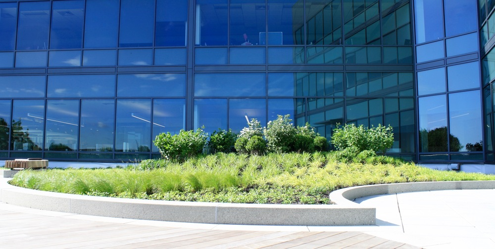 Recover-Green-Roofs-Intensive-Green-Roof-Office-1