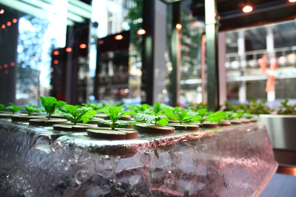 Recover-Green-Roofs-BGood-Seaport-Hydroponics-1