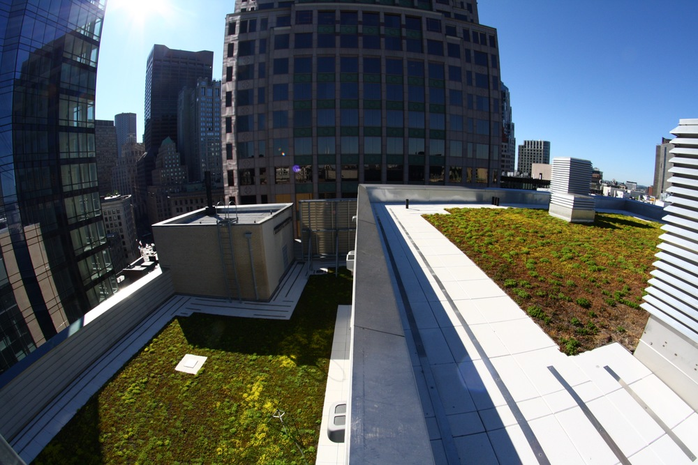 Recover-Green-Roofs-Extensive-Green-Roof-Boston-1