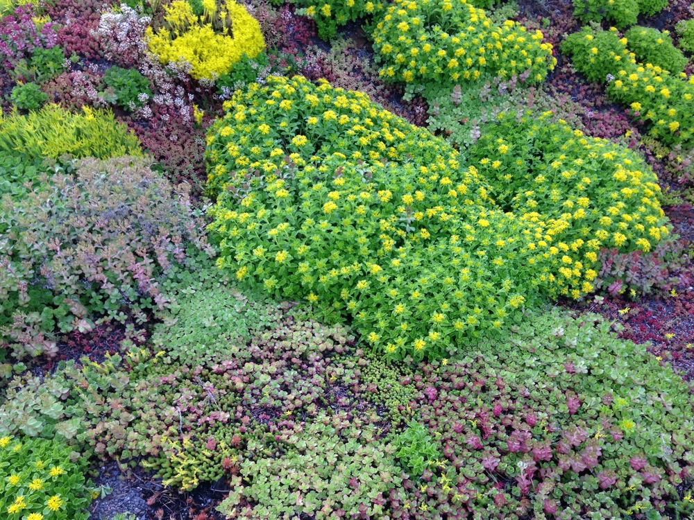 Recover-Green-Roofs-Residential-Green-Roof-Ranch-4