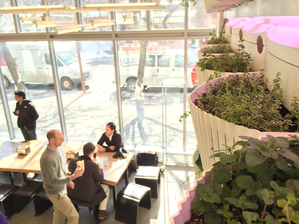 Recover-Green-Roofs-Green-Wall-Clover-Kendall-6