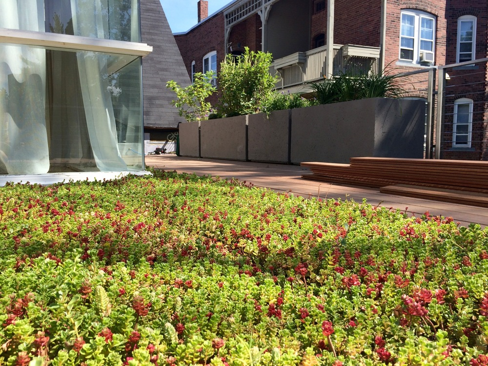Recover-Green-Roofs-Residential-Green-Roof-Roof-Deck-Cambridge