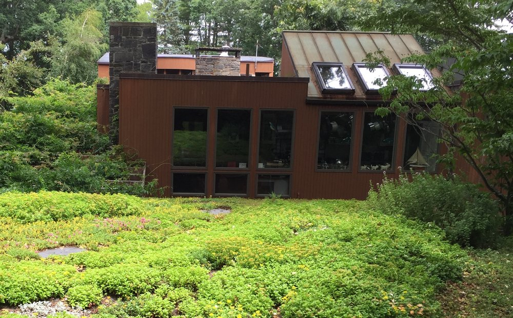 Recover-Green-Roofs-Residential-Green-Roof-Turtle-Bay