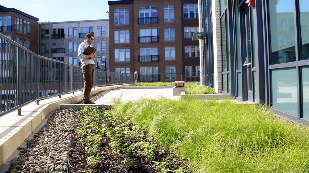 recover-green-roofs-assembly-row-green-roof-2016-10.jpg