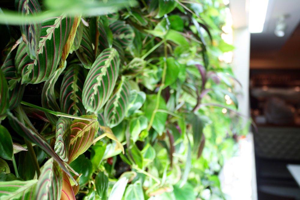 recover-green-roofs-casa-b-green-wall-2016-8.jpg