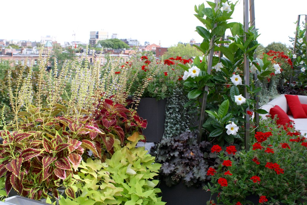 recover-green-roofs-rooftop-patio-boston-2016-3.jpg