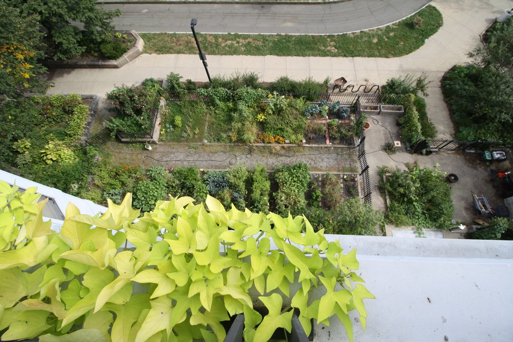 recover-green-roofs-rooftop-patio-boston-2016-10.jpg