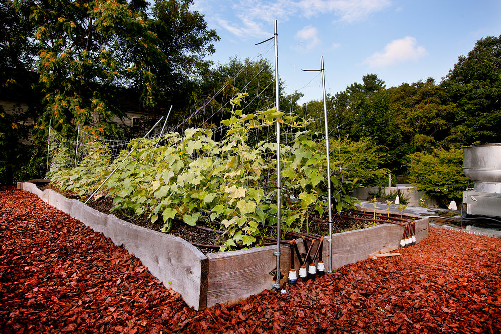 recover-green-roofs-rooftop-farm-ester-ledge-2010-12.jpg