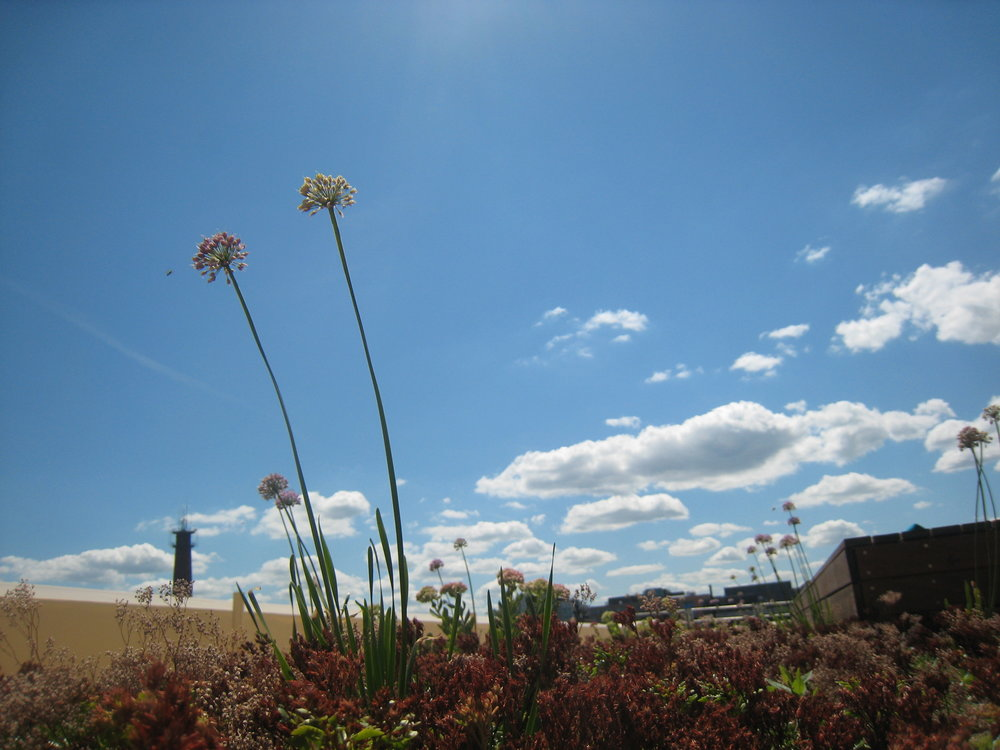 recover-green-roofs-factory-63-boston-11.JPG