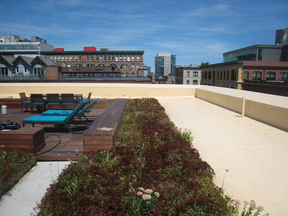 recover-green-roofs-factory-63-boston-6.JPG