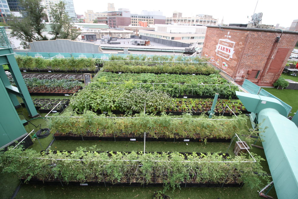 recover-green-roofs-fenway-farms-oct-2016-5.JPG