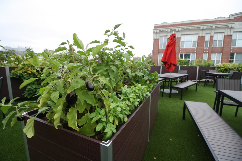 recover-green-roofs-fenway-farms-oct-2016-28.JPG
