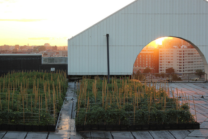 recover-green-roofs-higher-ground-farm-2013-21.jpg