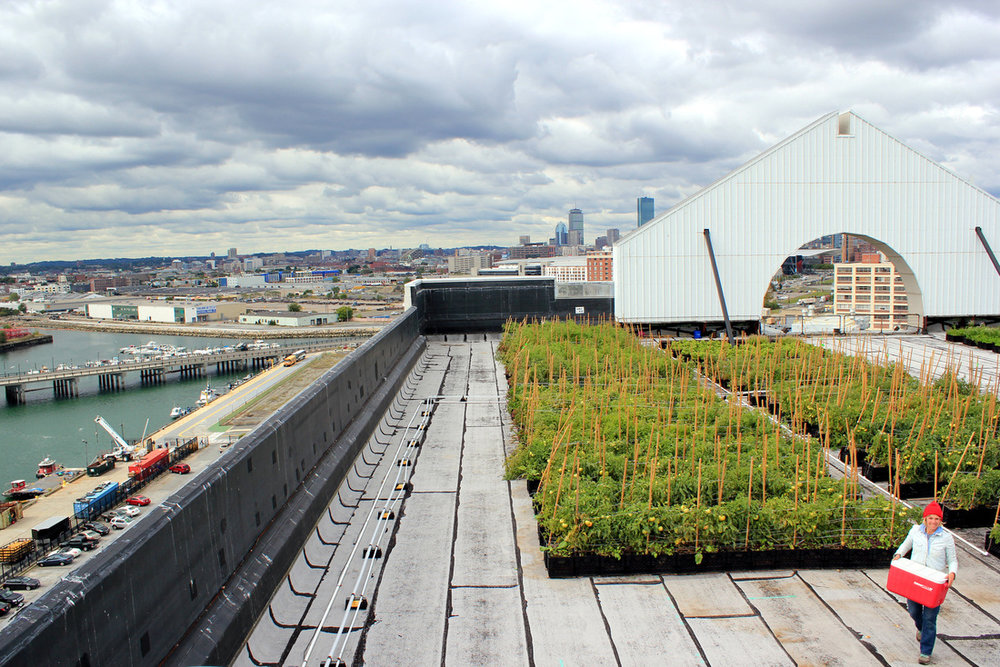 recover-green-roofs-higher-ground-farm-2013-23.jpg