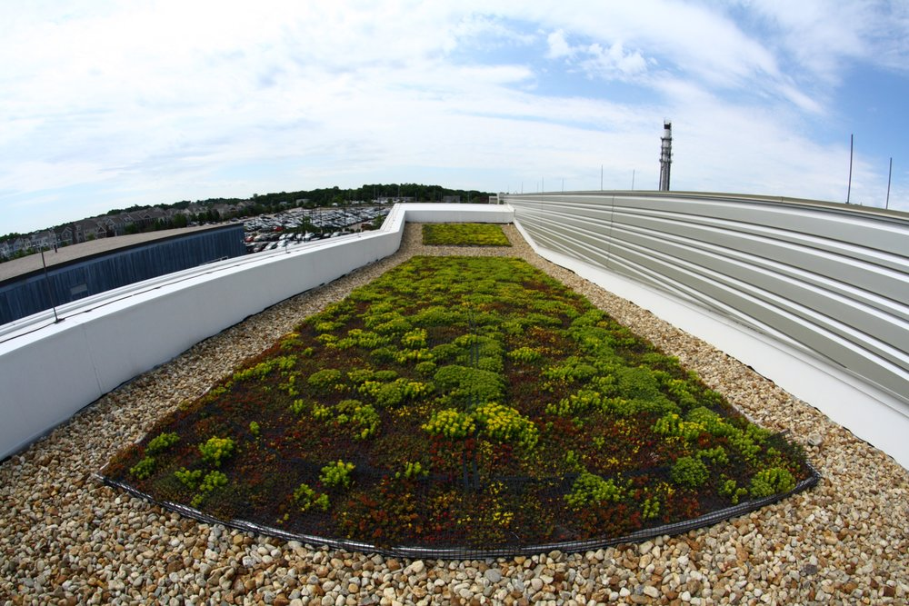 recover-green-roofs-hingham-mbta-2016-13.jpg