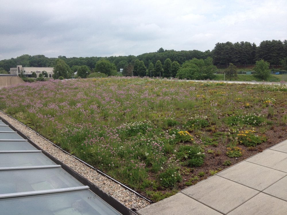 recover-green-roofs-holyoke-2015-4.JPG