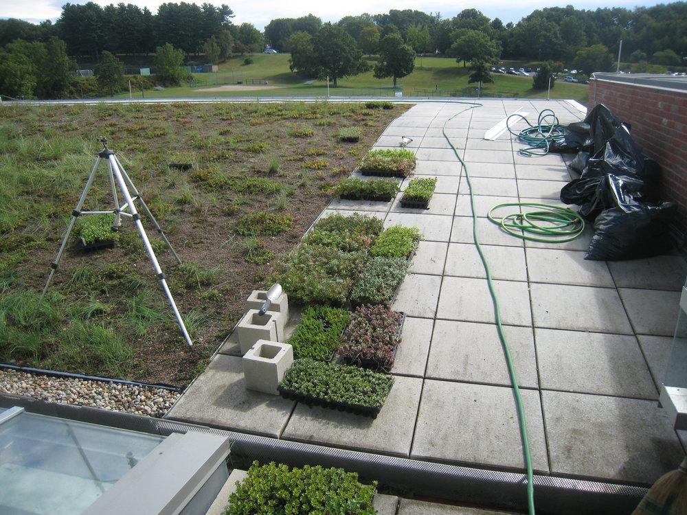recover-green-roofs-holyoke-2015-2.JPG