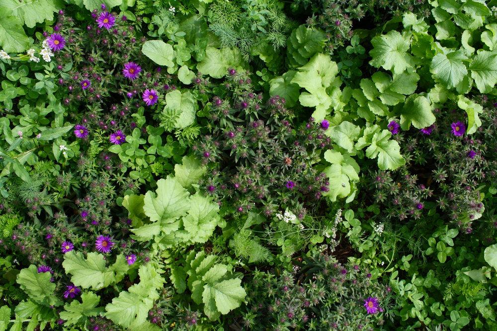 recover-green-roofs-harvard-business-school-garden-2017-6.jpg